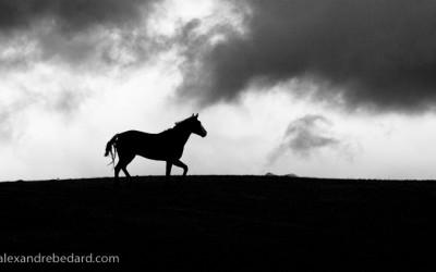 Silhouette de cheval